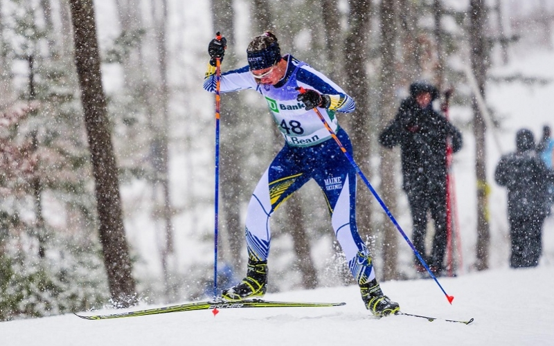 Owls at Lake Placid