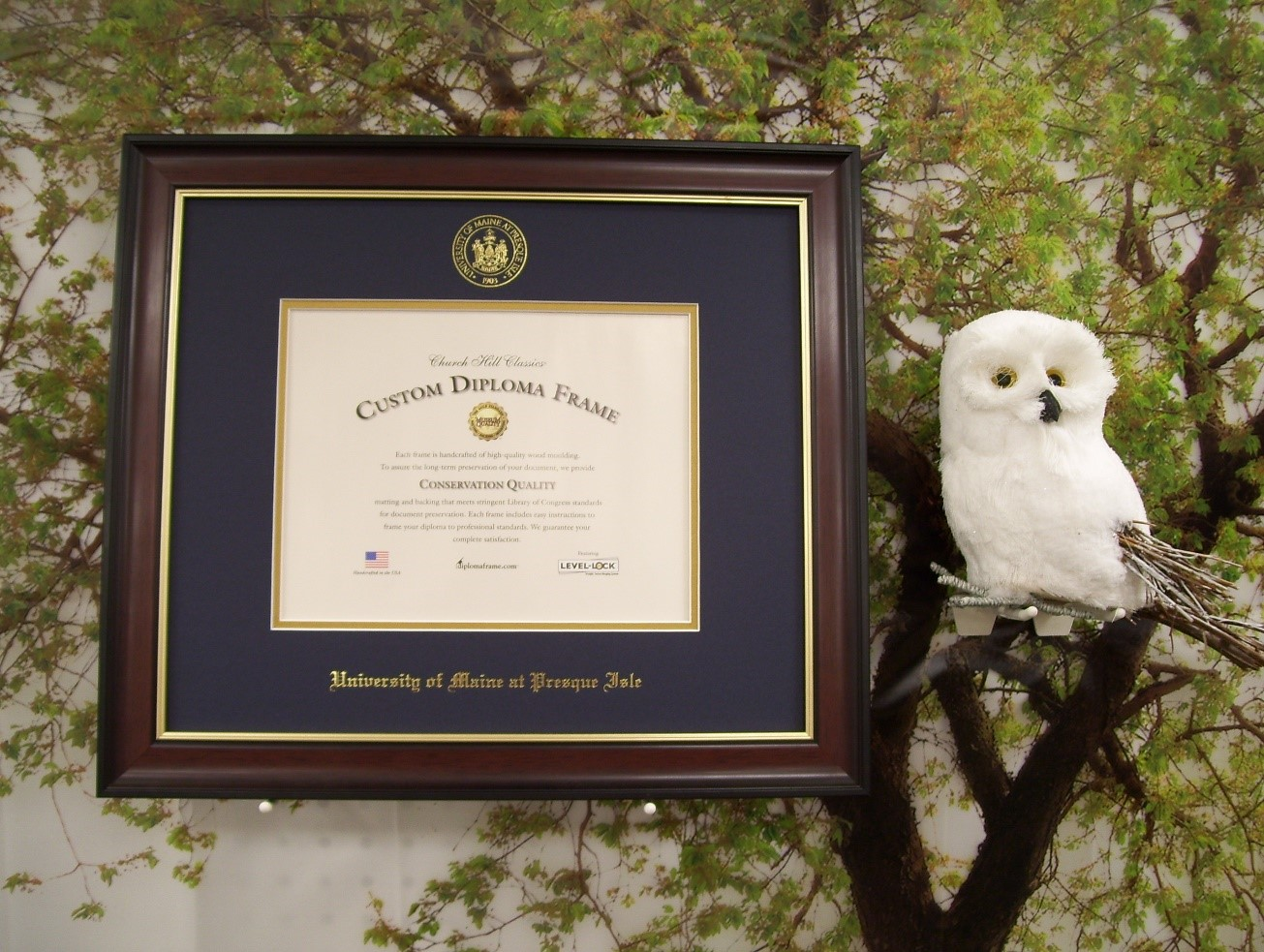 Campus Store offering diploma frames
